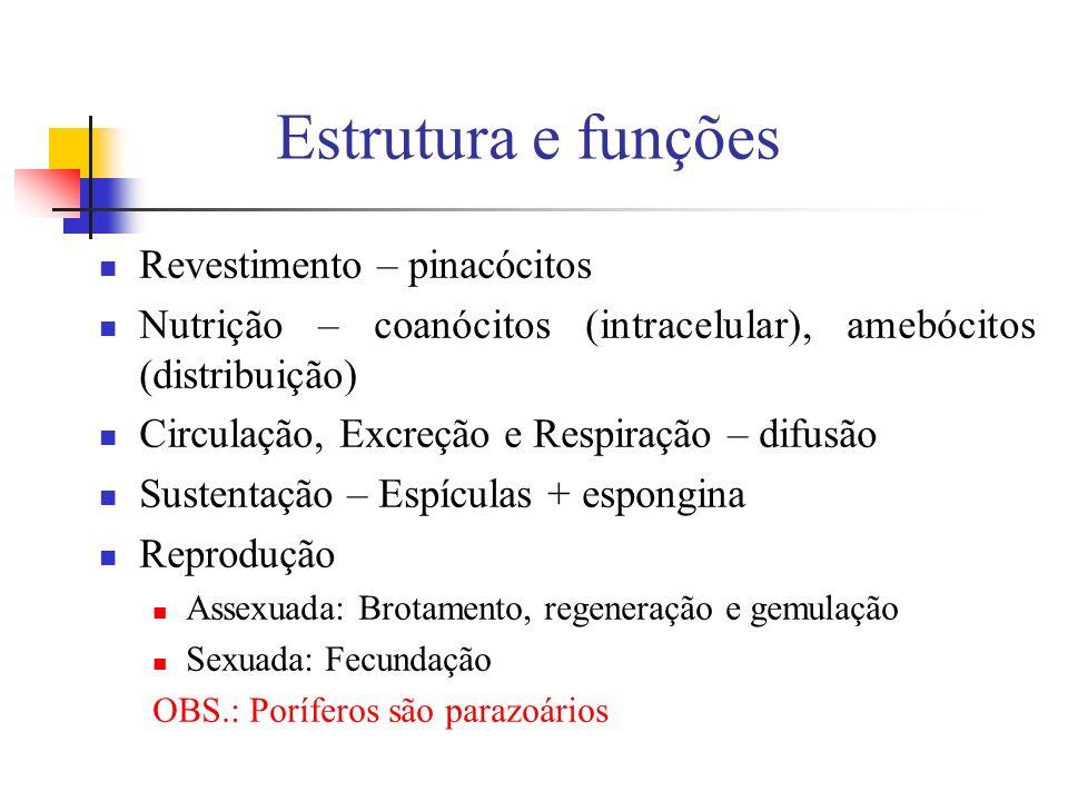 Estrutura e funções Revestimento – pinacócitos