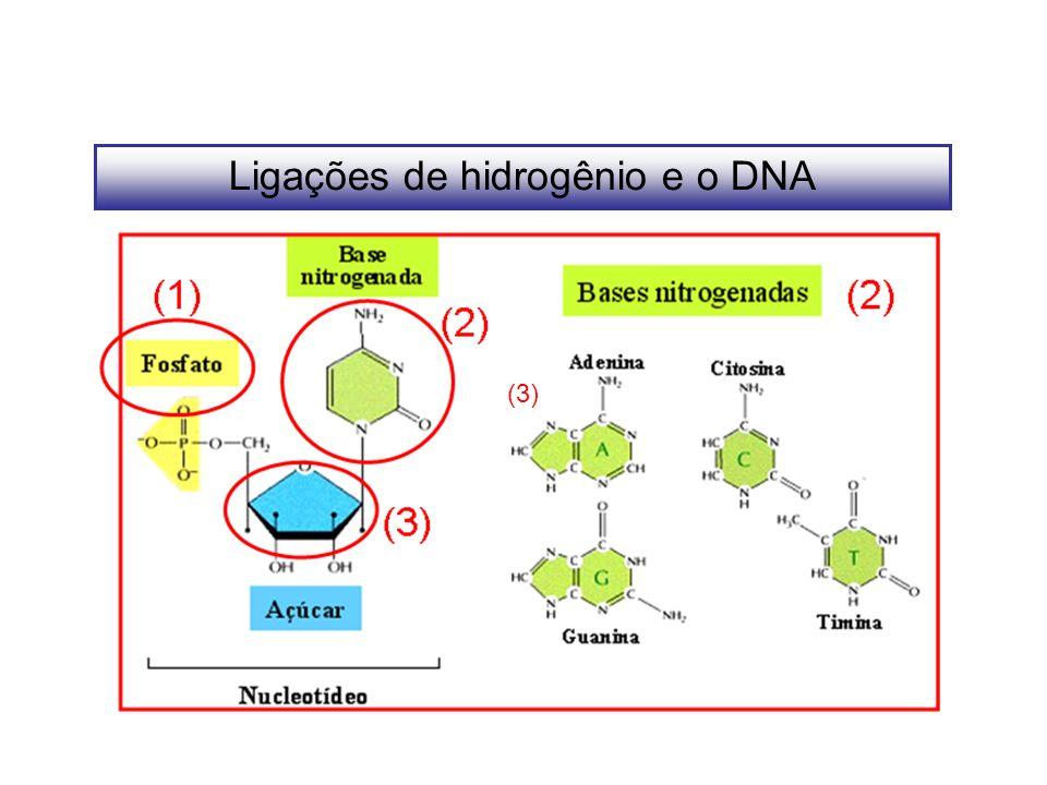 Ligações de hidrogênio e o DNA