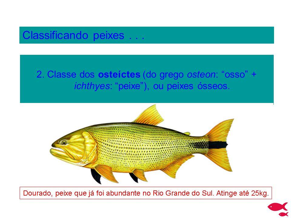 Classificando peixes . 2.