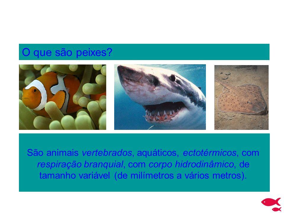 O que são peixes