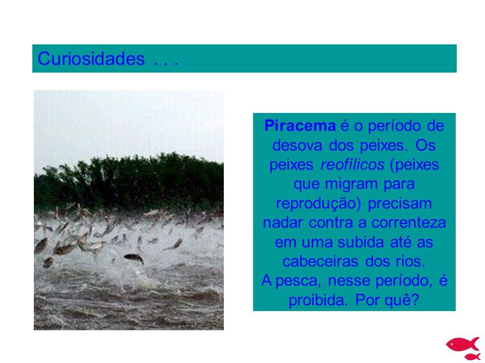 A pesca, nesse período, é proibida. Por quê