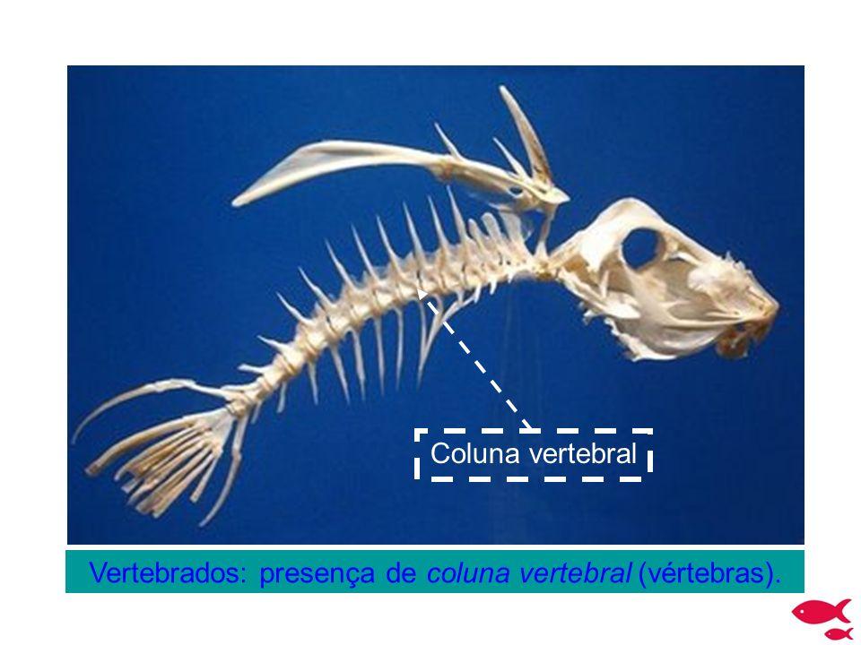 Vertebrados: presença de coluna vertebral (vértebras).