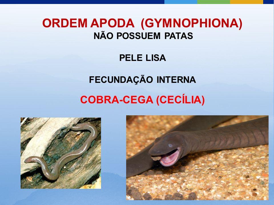 ORDEM APODA (GYMNOPHIONA)