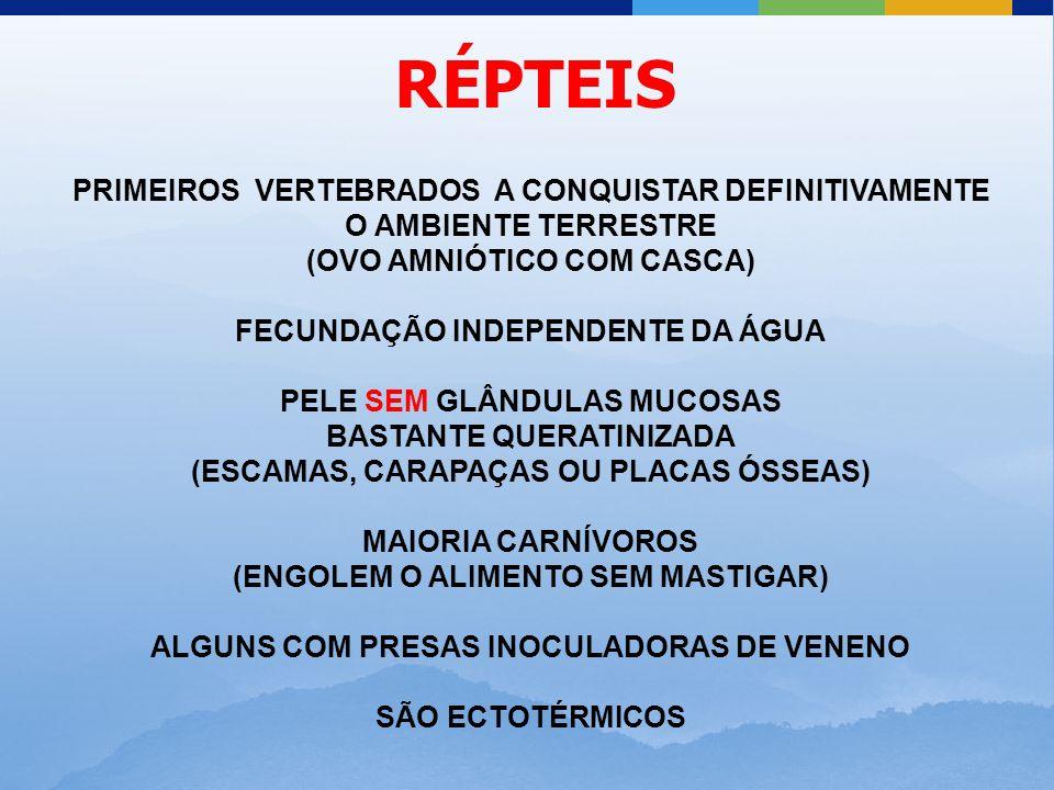 RÉPTEIS PRIMEIROS VERTEBRADOS A CONQUISTAR DEFINITIVAMENTE O AMBIENTE TERRESTRE. (OVO AMNIÓTICO COM CASCA)