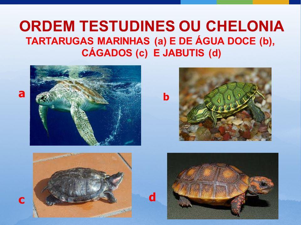 ORDEM TESTUDINES OU CHELONIA
