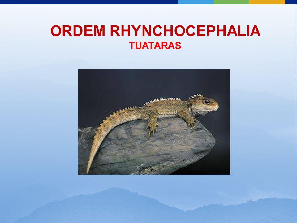 ORDEM RHYNCHOCEPHALIA