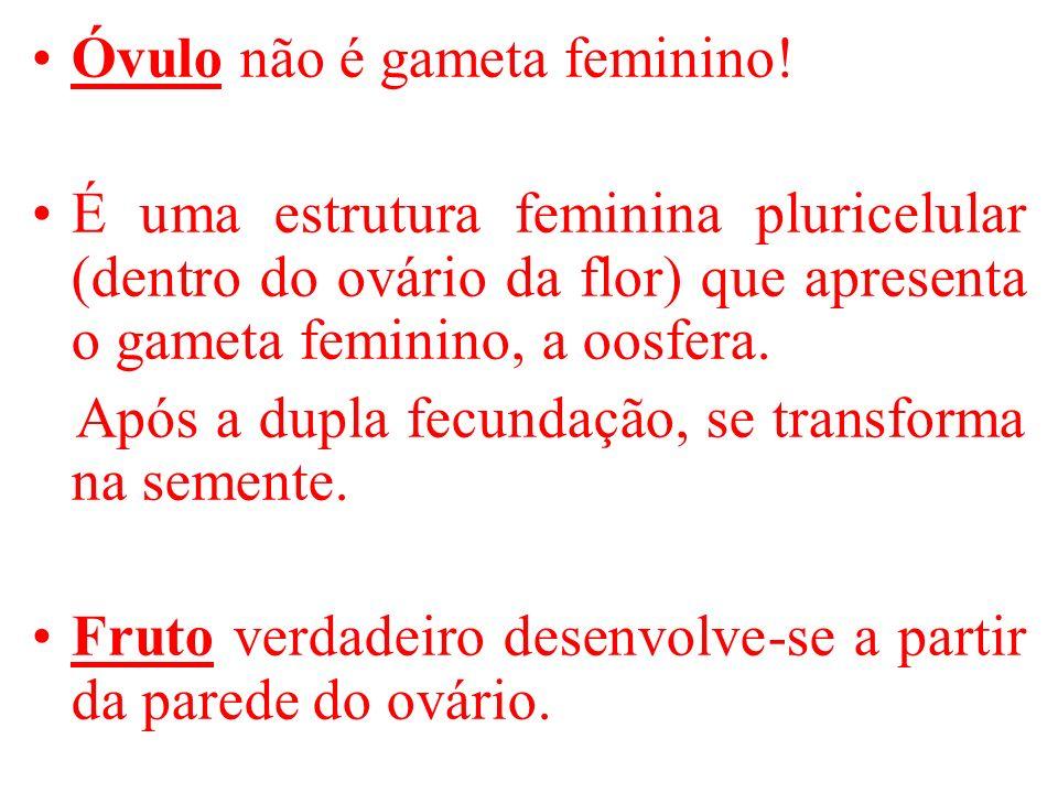 Óvulo não é gameta feminino!