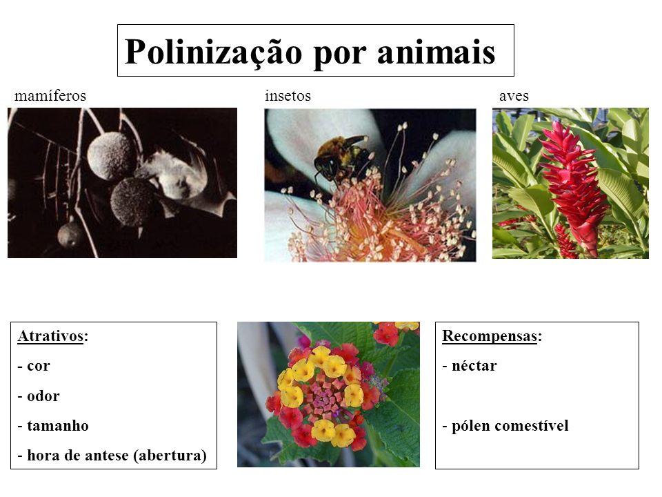 Polinização por animais