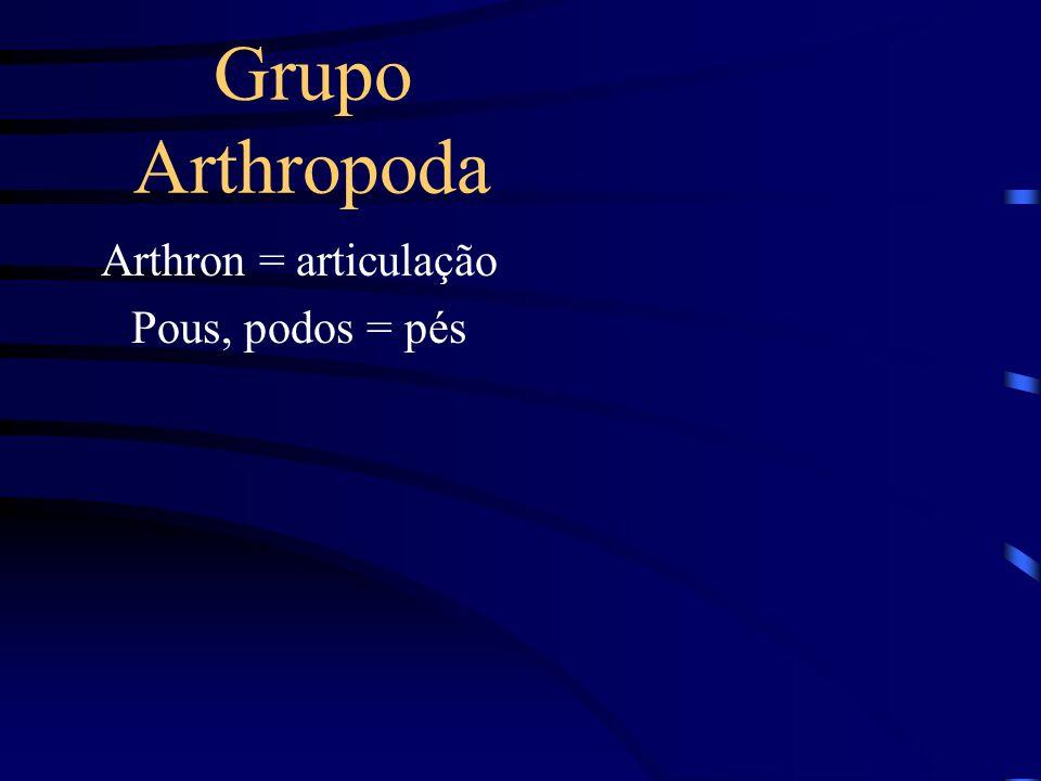 Arthron = articulação Pous, podos = pés