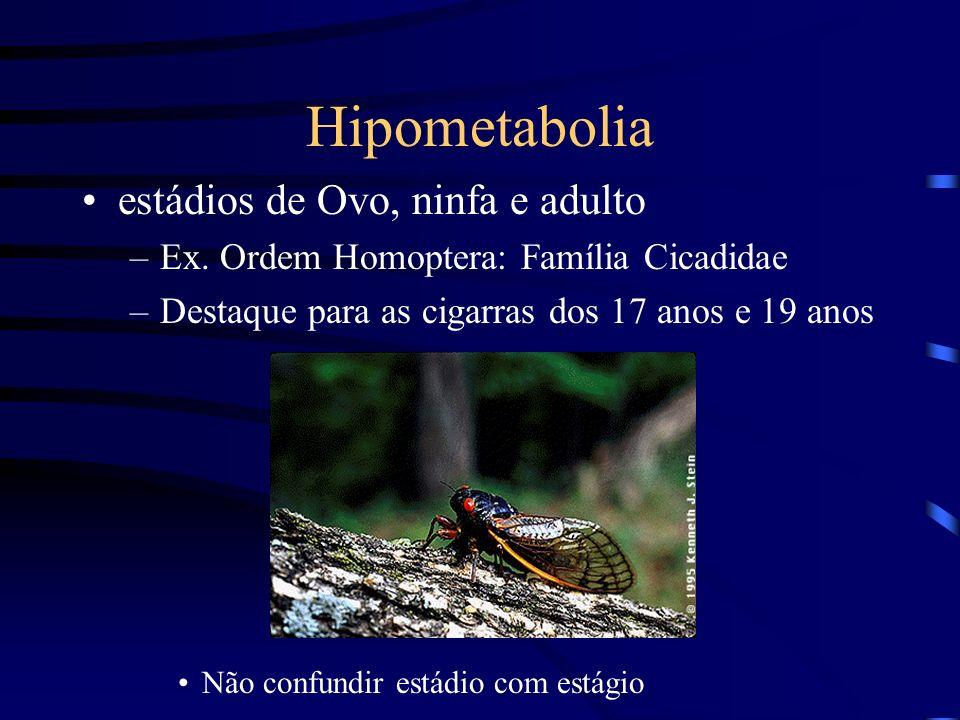 Hipometabolia estádios de Ovo, ninfa e adulto
