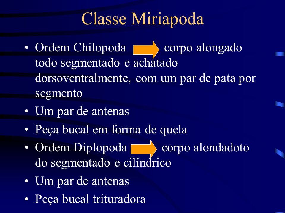 Classe Miriapoda Ordem Chilopoda corpo alongado todo segmentado e achatado dorsoventralmente, com um par de pata por segmento.