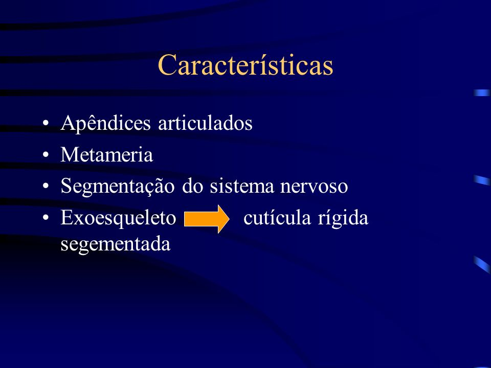 Características Apêndices articulados Metameria