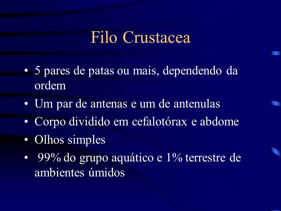 Filo Crustacea 5 pares de patas ou mais, dependendo da ordem