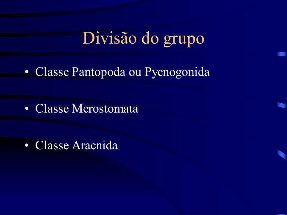 Divisão do grupo Classe Pantopoda ou Pycnogonida Classe Merostomata