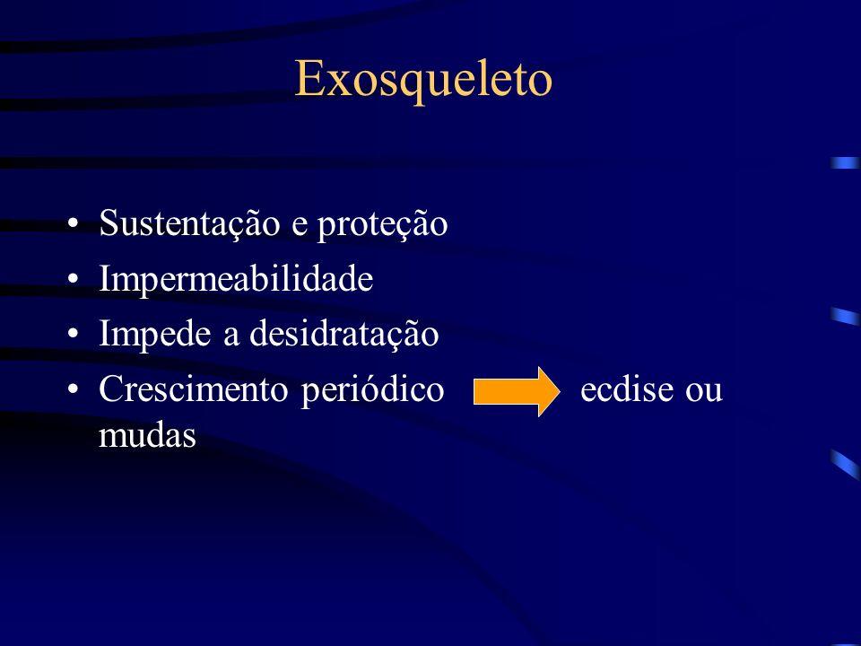 Exosqueleto Sustentação e proteção Impermeabilidade