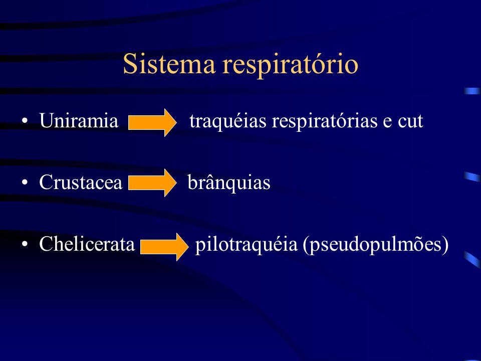 Sistema respiratório Uniramia traquéias respiratórias e cut