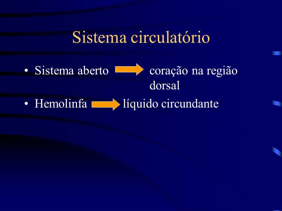 Sistema circulatório Sistema aberto coração na região dorsal