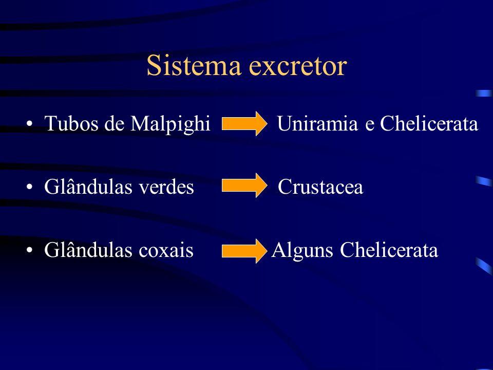 Sistema excretor Tubos de Malpighi Uniramia e Chelicerata