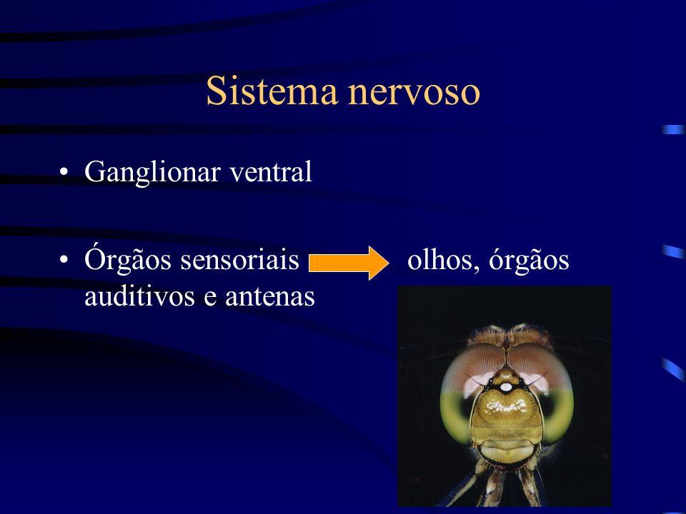 Sistema nervoso Ganglionar ventral