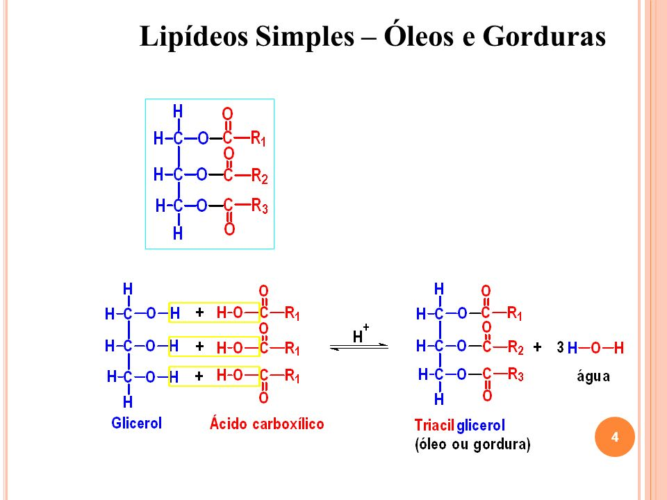 Lipídeos Simples – Óleos e Gorduras