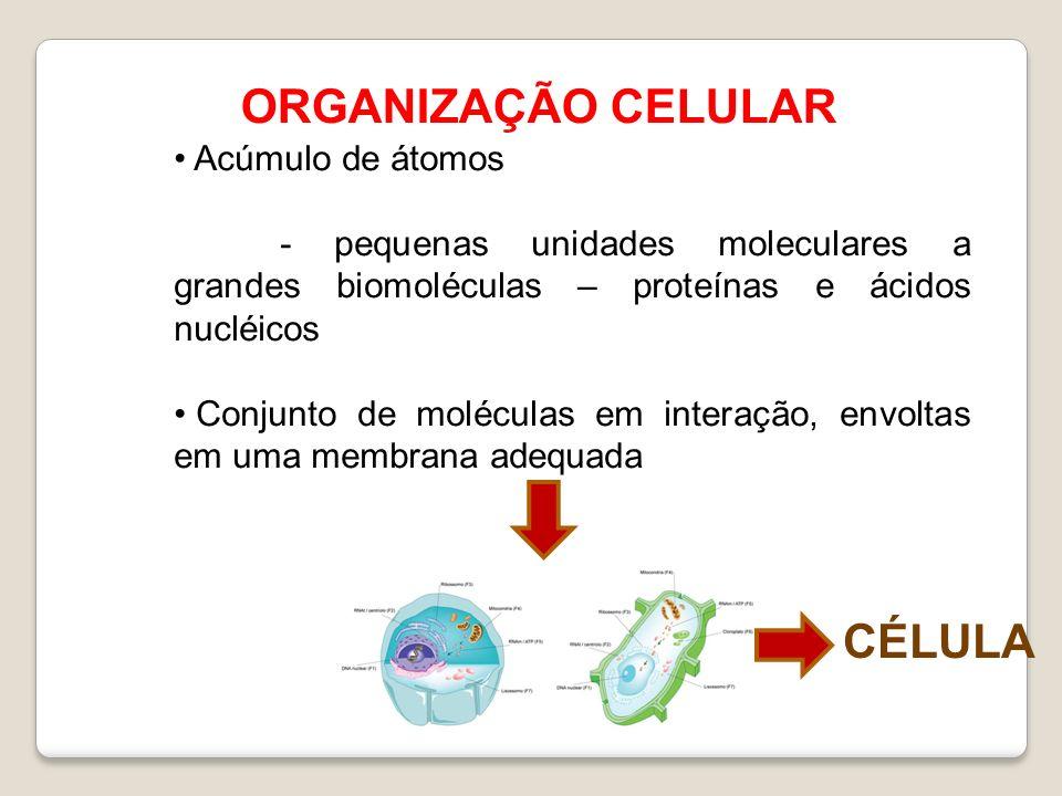 ORGANIZAÇÃO CELULAR CÉLULA Acúmulo de átomos