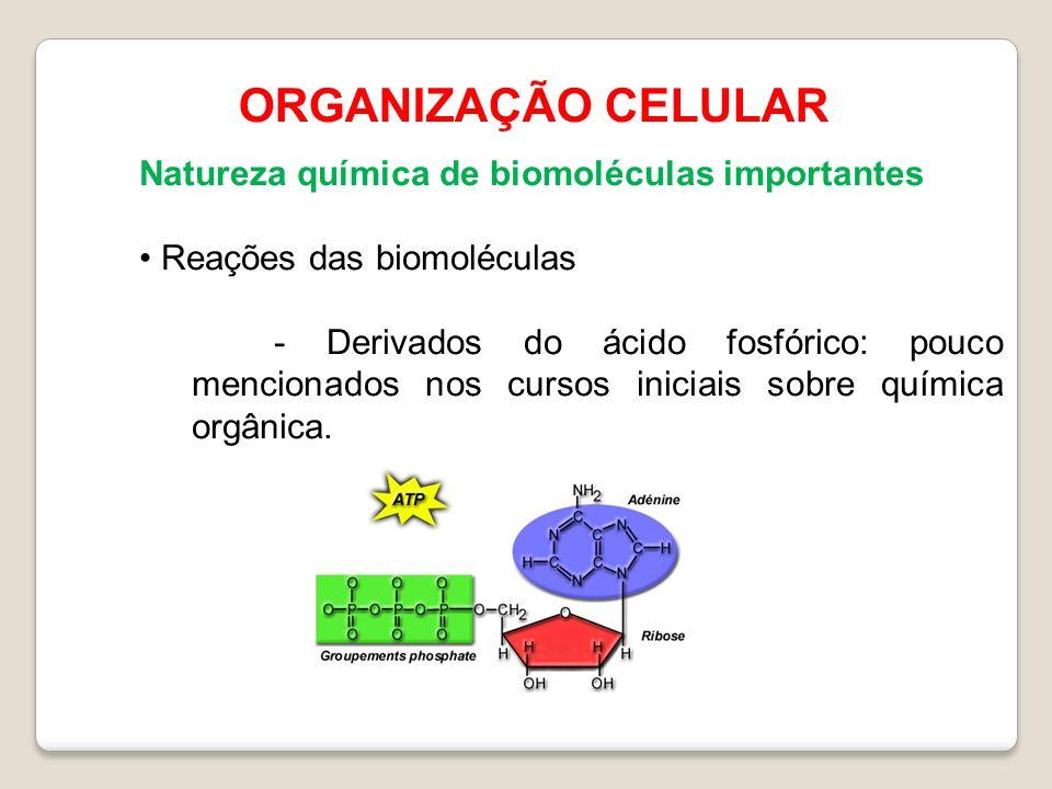 ORGANIZAÇÃO CELULAR Natureza química de biomoléculas importantes