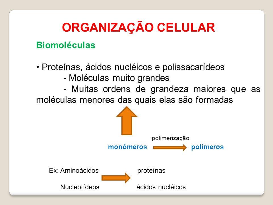 ORGANIZAÇÃO CELULAR Biomoléculas