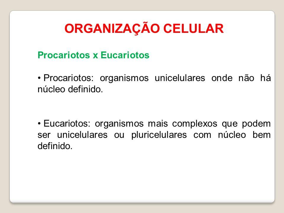 ORGANIZAÇÃO CELULAR Procariotos x Eucariotos