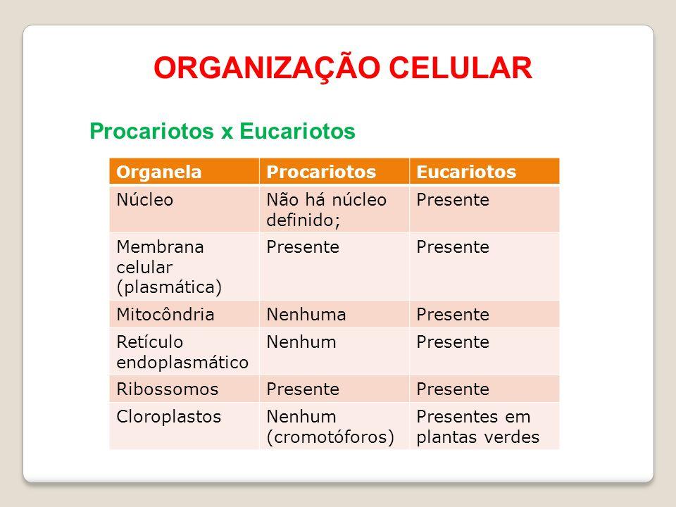 ORGANIZAÇÃO CELULAR Procariotos x Eucariotos Organela Procariotos