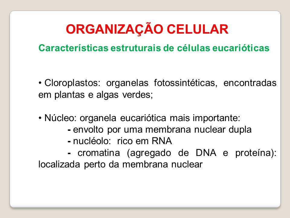 ORGANIZAÇÃO CELULAR Características estruturais de células eucarióticas.