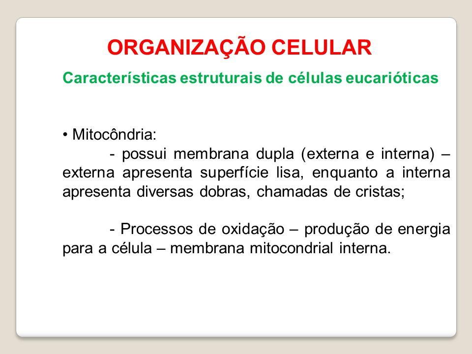 ORGANIZAÇÃO CELULAR Características estruturais de células eucarióticas. Mitocôndria: