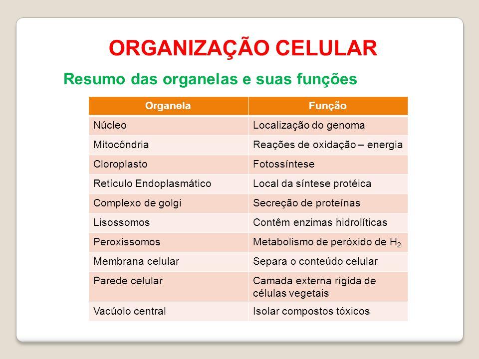ORGANIZAÇÃO CELULAR Resumo das organelas e suas funções Organela