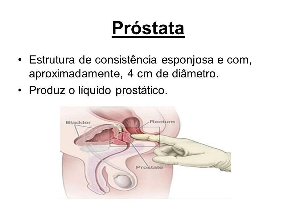 Próstata Estrutura de consistência esponjosa e com, aproximadamente, 4 cm de diâmetro.