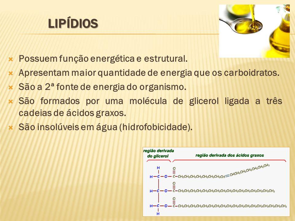 Lipídios Possuem função energética e estrutural.