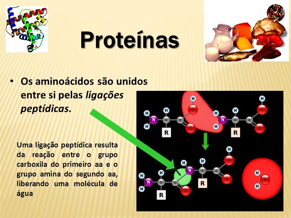 ProteínasOs aminoácidos são unidos entre si pelas ligações peptídicas.