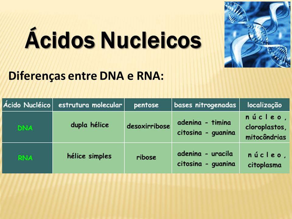 Ácidos Nucleicos Diferenças entre DNA e RNA: