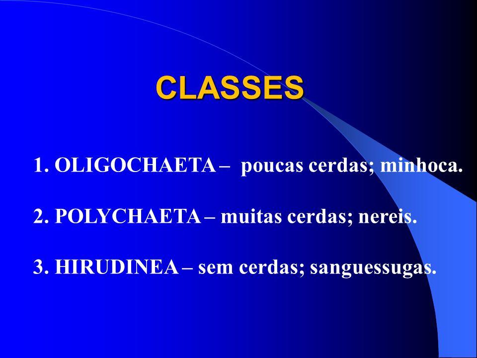 CLASSES 1. OLIGOCHAETA – poucas cerdas; minhoca.