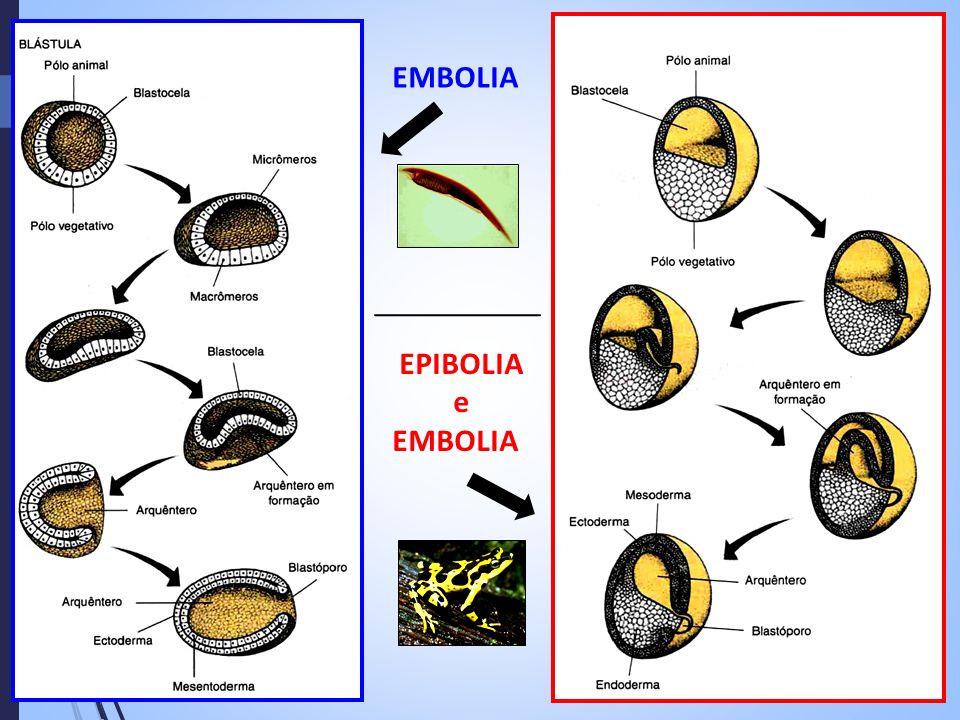 EMBOLIA EPIBOLIA e EMBOLIA
