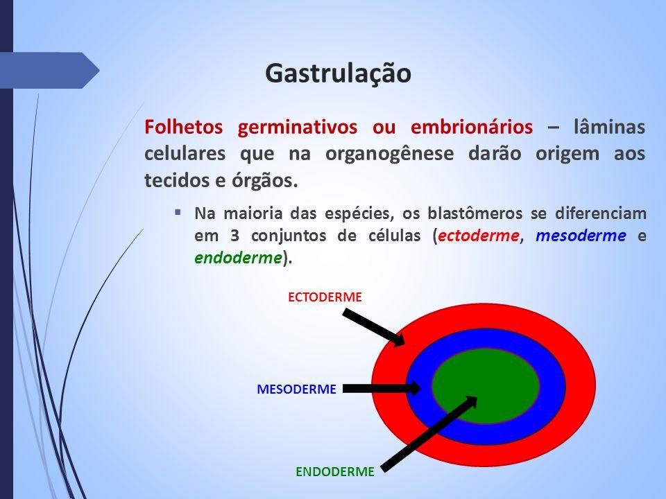 Gastrulação Folhetos germinativos ou embrionários – lâminas celulares que na organogênese darão origem aos tecidos e órgãos.
