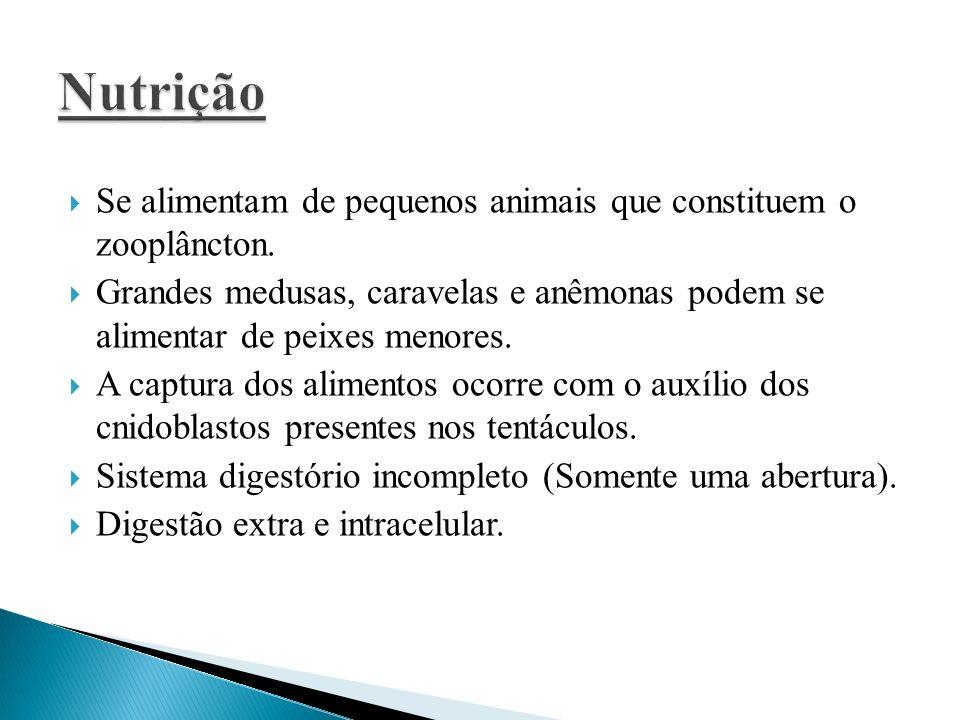 NutriçãoSe alimentam de pequenos animais que constituem o zooplâncton. Grandes medusas, caravelas e anêmonas podem se alimentar de peixes menores.