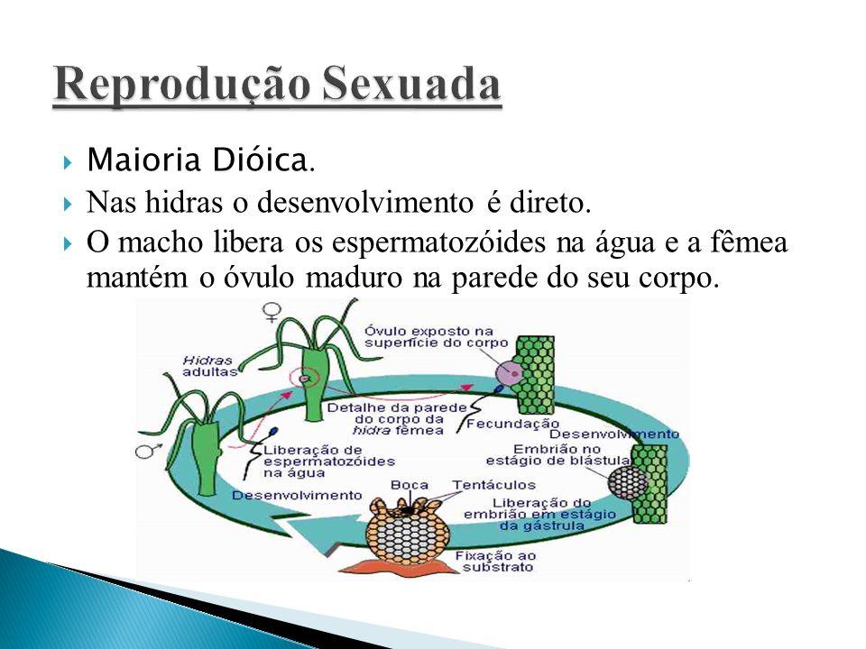 Reprodução Sexuada Maioria Dióica.