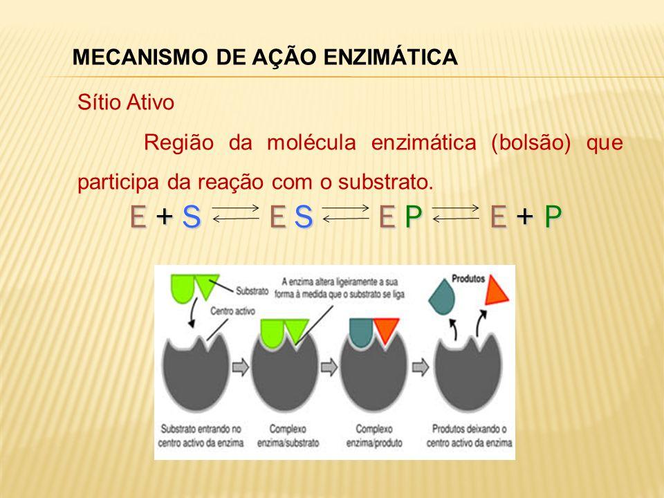 E + S E S E P E + P MECANISMO DE AÇÃO ENZIMÁTICA Sítio Ativo