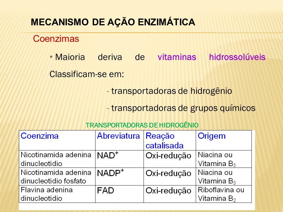 MECANISMO DE AÇÃO ENZIMÁTICA Coenzimas