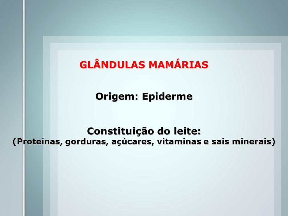GLÂNDULAS MAMÁRIAS Origem: Epiderme Constituição do leite: