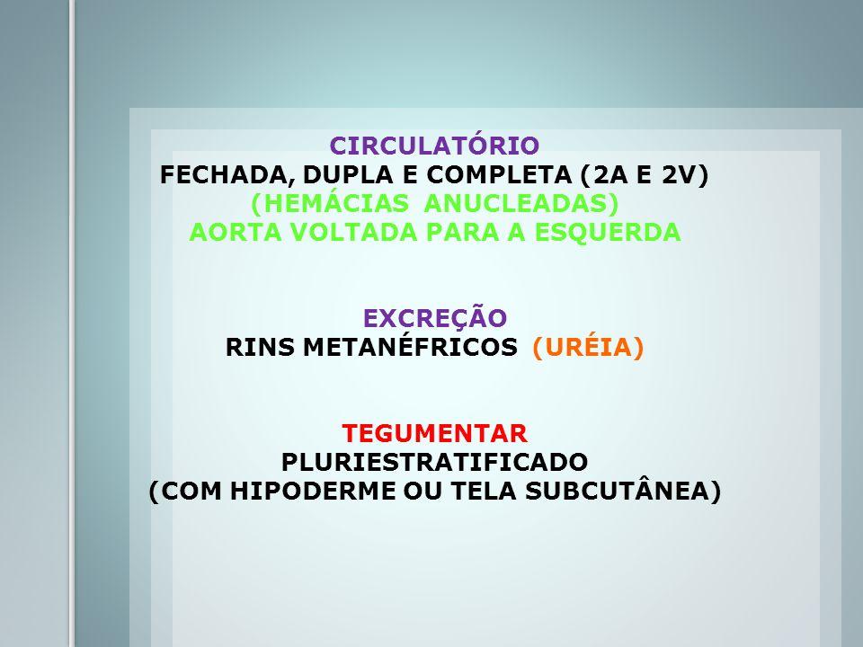 FECHADA, DUPLA E COMPLETA (2A E 2V) (HEMÁCIAS ANUCLEADAS)