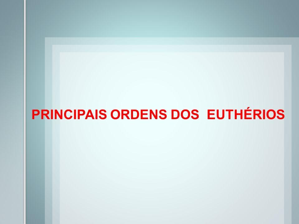 PRINCIPAIS ORDENS DOS EUTHÉRIOS