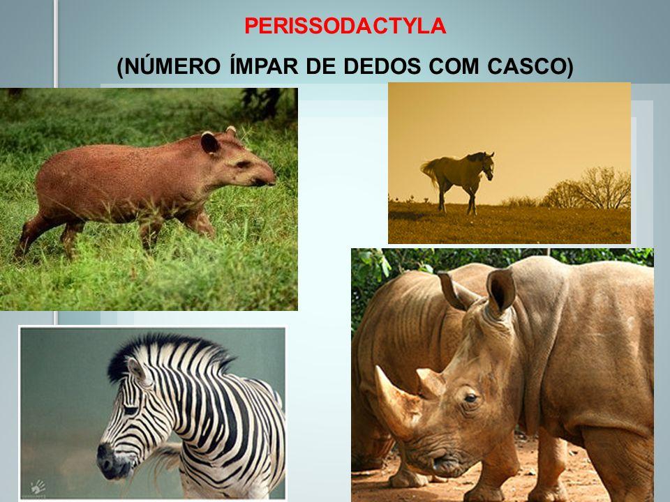 (NÚMERO ÍMPAR DE DEDOS COM CASCO)