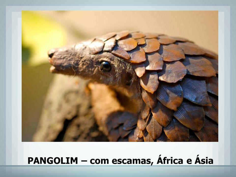 PANGOLIM – com escamas, África e Ásia