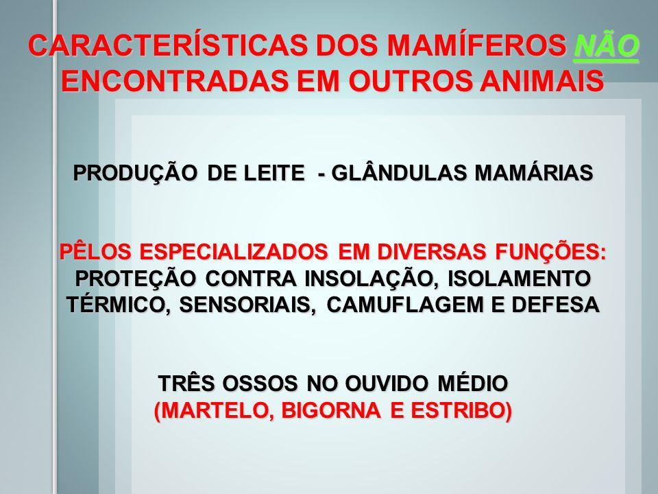 CARACTERÍSTICAS DOS MAMÍFEROS NÃO ENCONTRADAS EM OUTROS ANIMAIS
