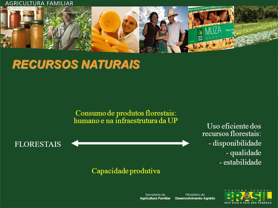 Consumo de produtos florestais: humano e na infraestrutura da UP